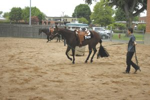 MS-MR-3-MQHA-horse-show4496